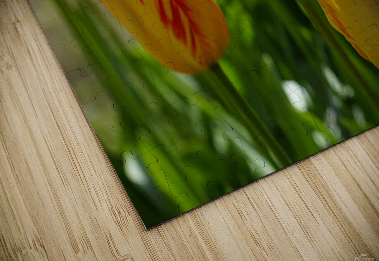 Spring Blooms of Holland 1 of 8 HD Sublimation Metal print