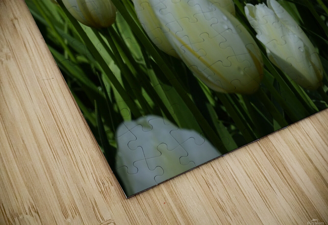 Spring Blooms of Holland 2 of 8 HD Sublimation Metal print