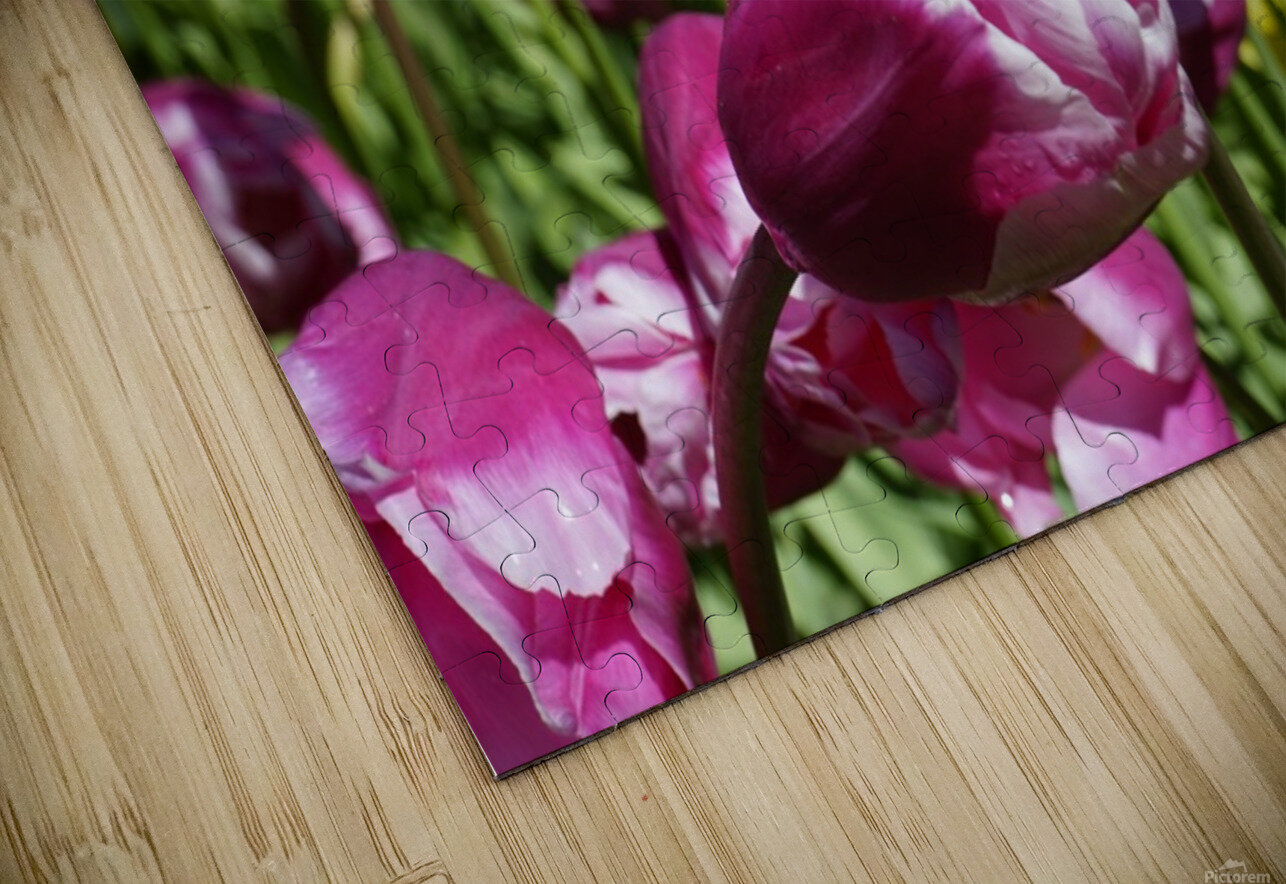 Purple HD Sublimation Metal print