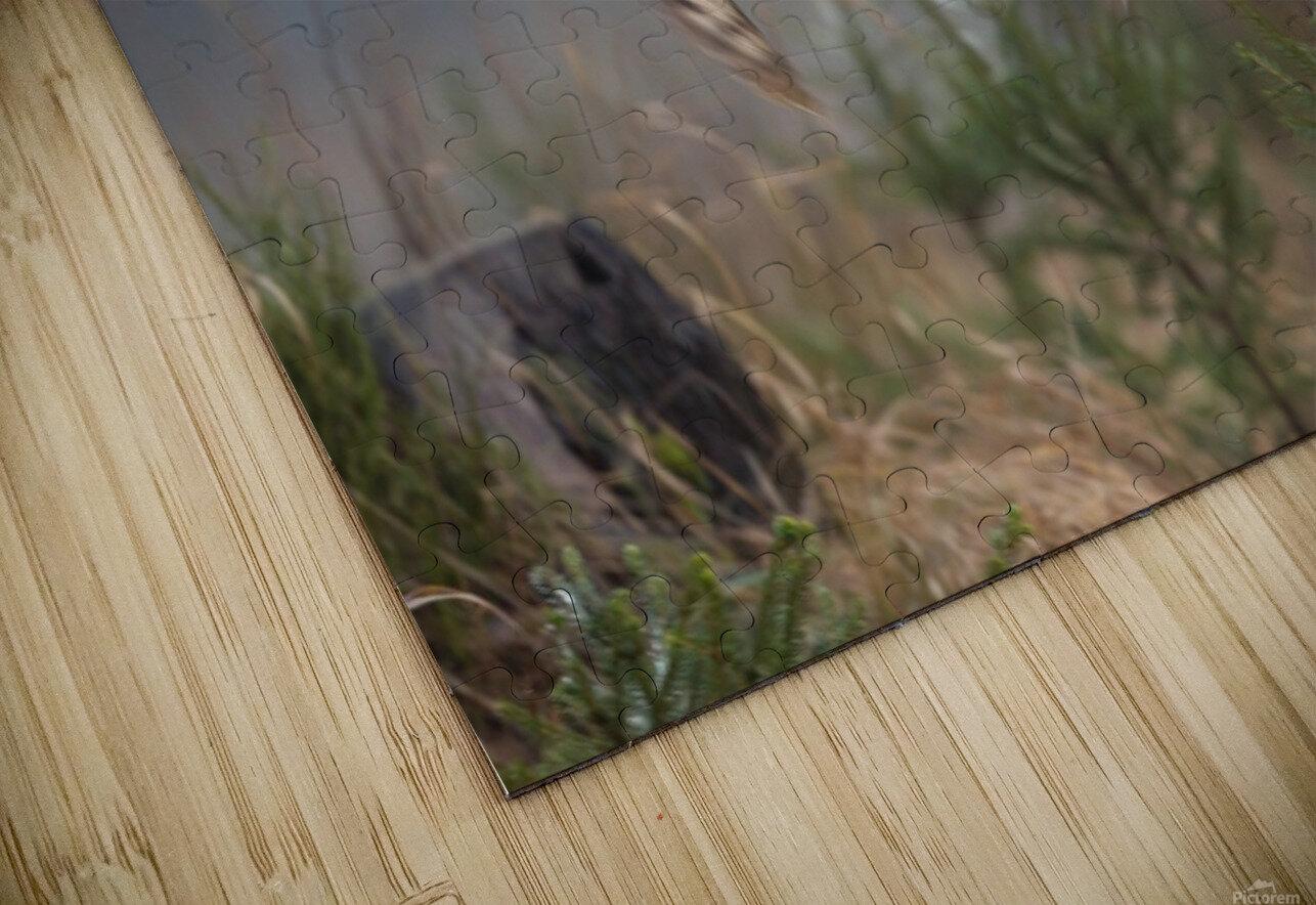 Eurasian Eagle-Owl by Milan Zygmunt  HD Sublimation Metal print