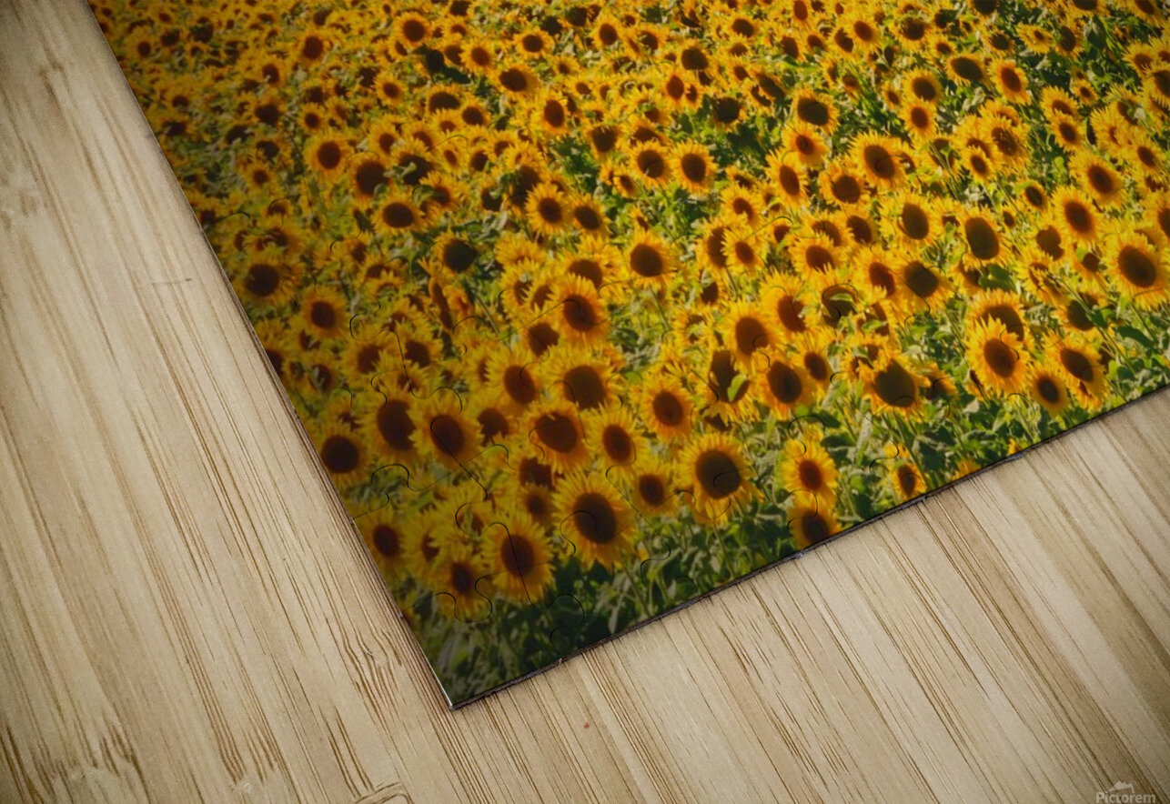 Sunflowers HD Sublimation Metal print