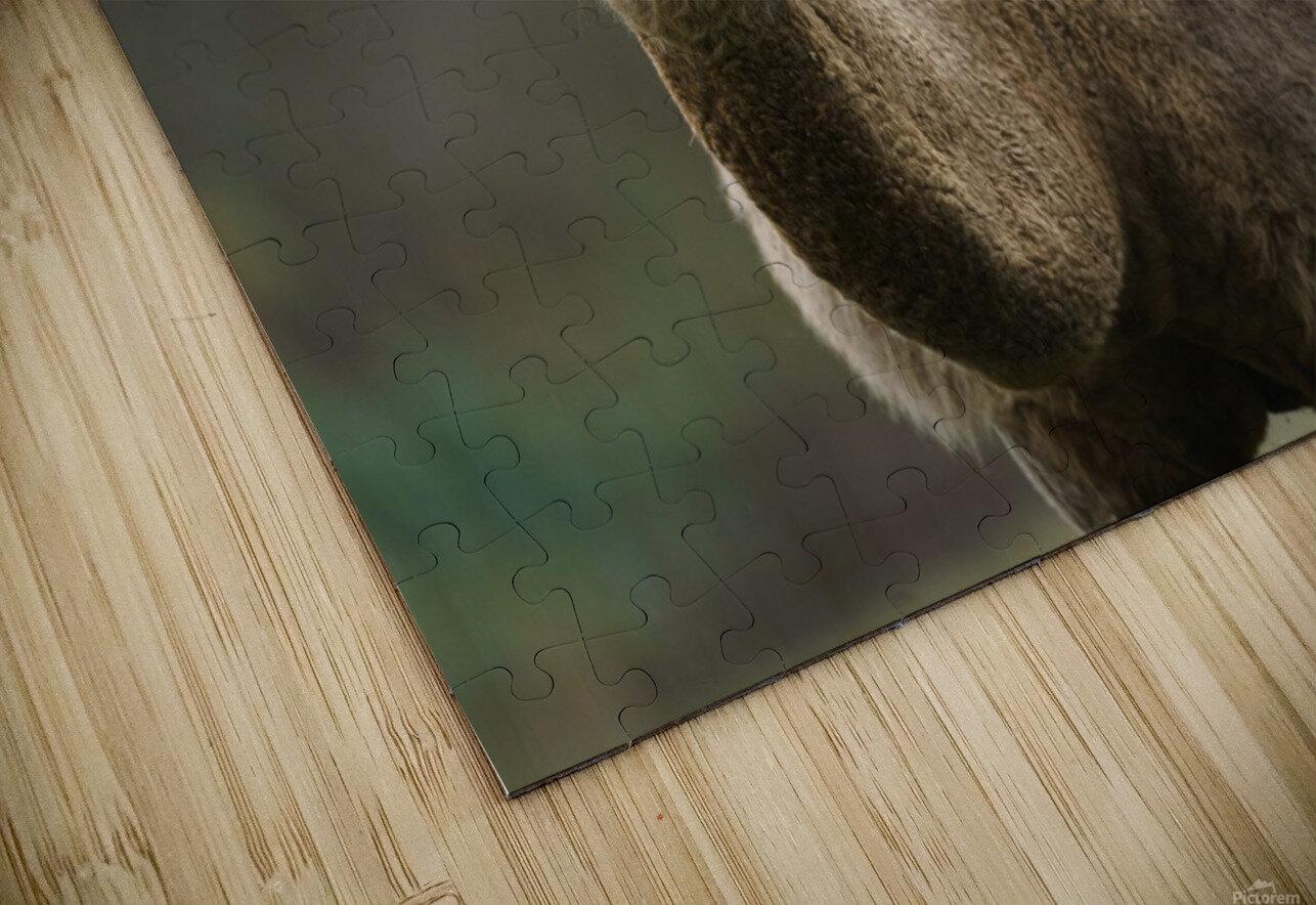 Camel HD Sublimation Metal print