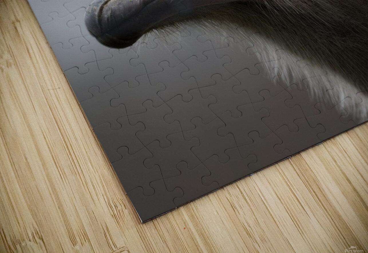 Ostrich HD Sublimation Metal print