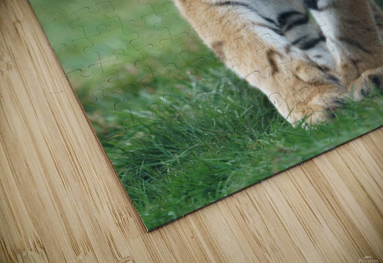 Siberian Tiger HD Sublimation Metal print