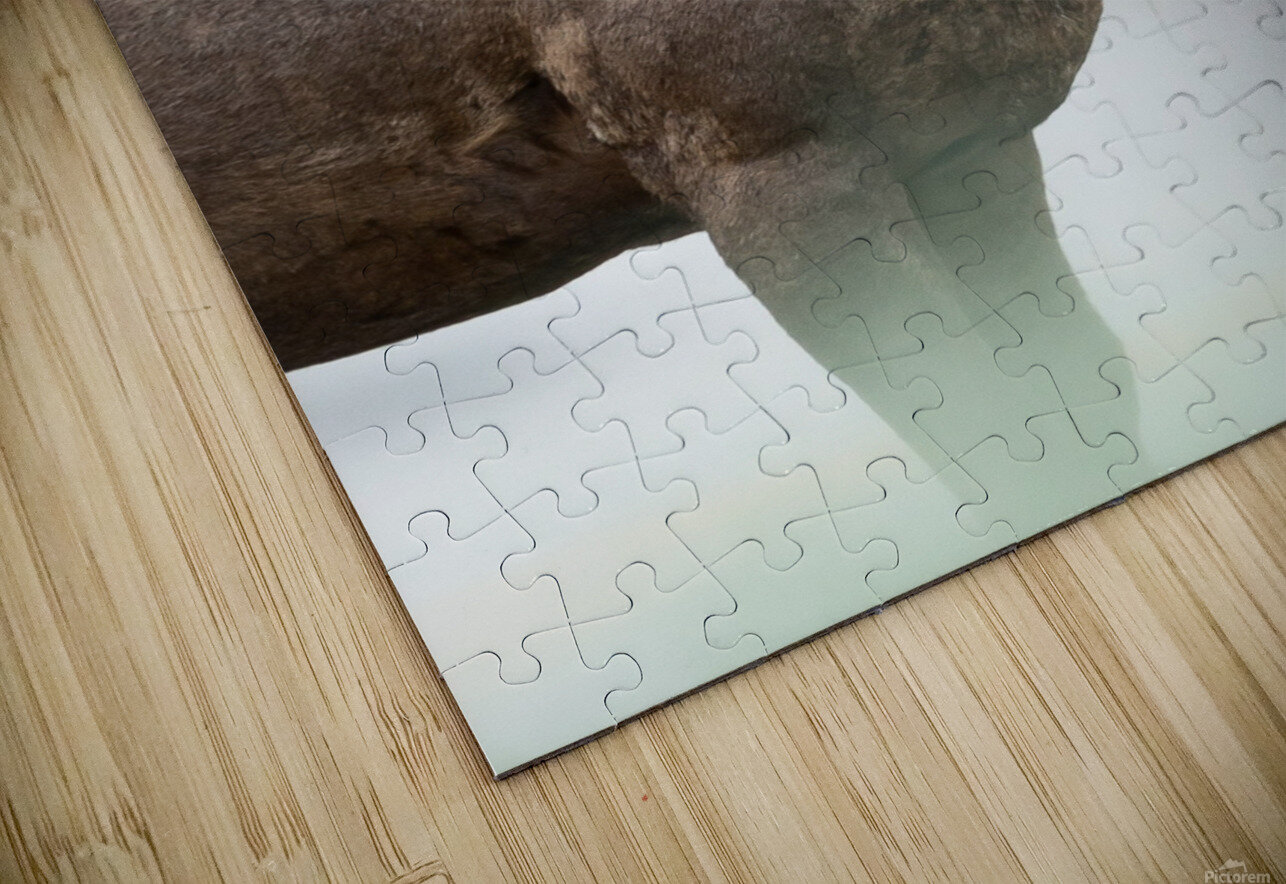 Bighorn Sheep HD Sublimation Metal print