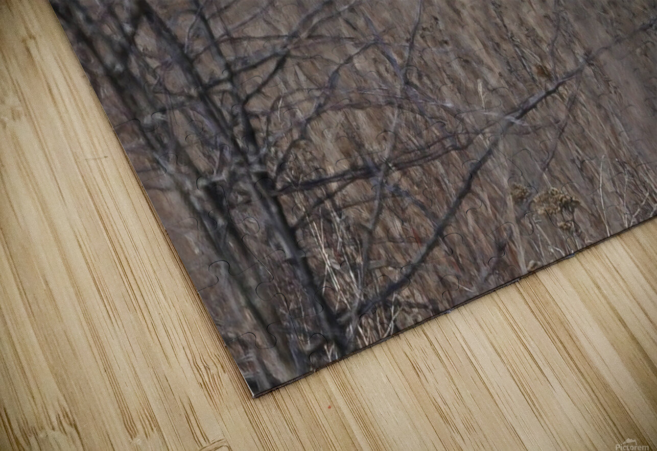 Wesley Allen Shaw 02102 HD Sublimation Metal print