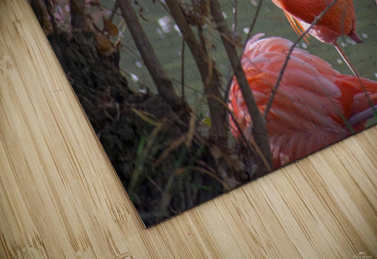 20181021 DSC 0492  2  1 HD Sublimation Metal print