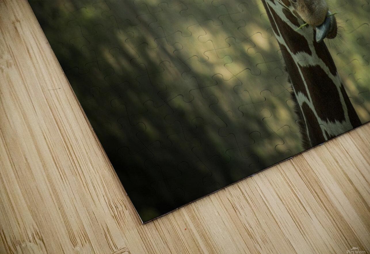 20181104 DSC 0164  3  HD Sublimation Metal print