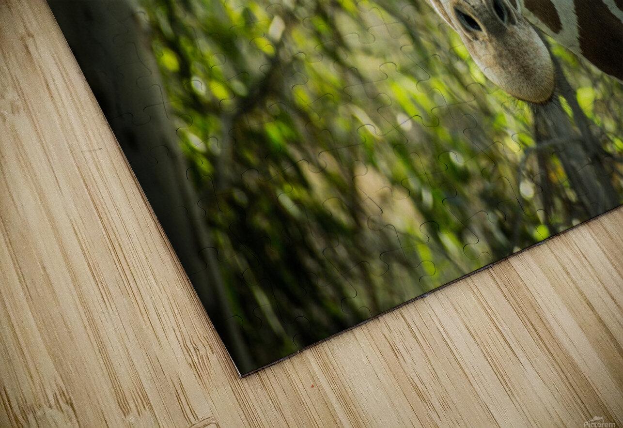 20181104 DSC 0191  3  HD Sublimation Metal print
