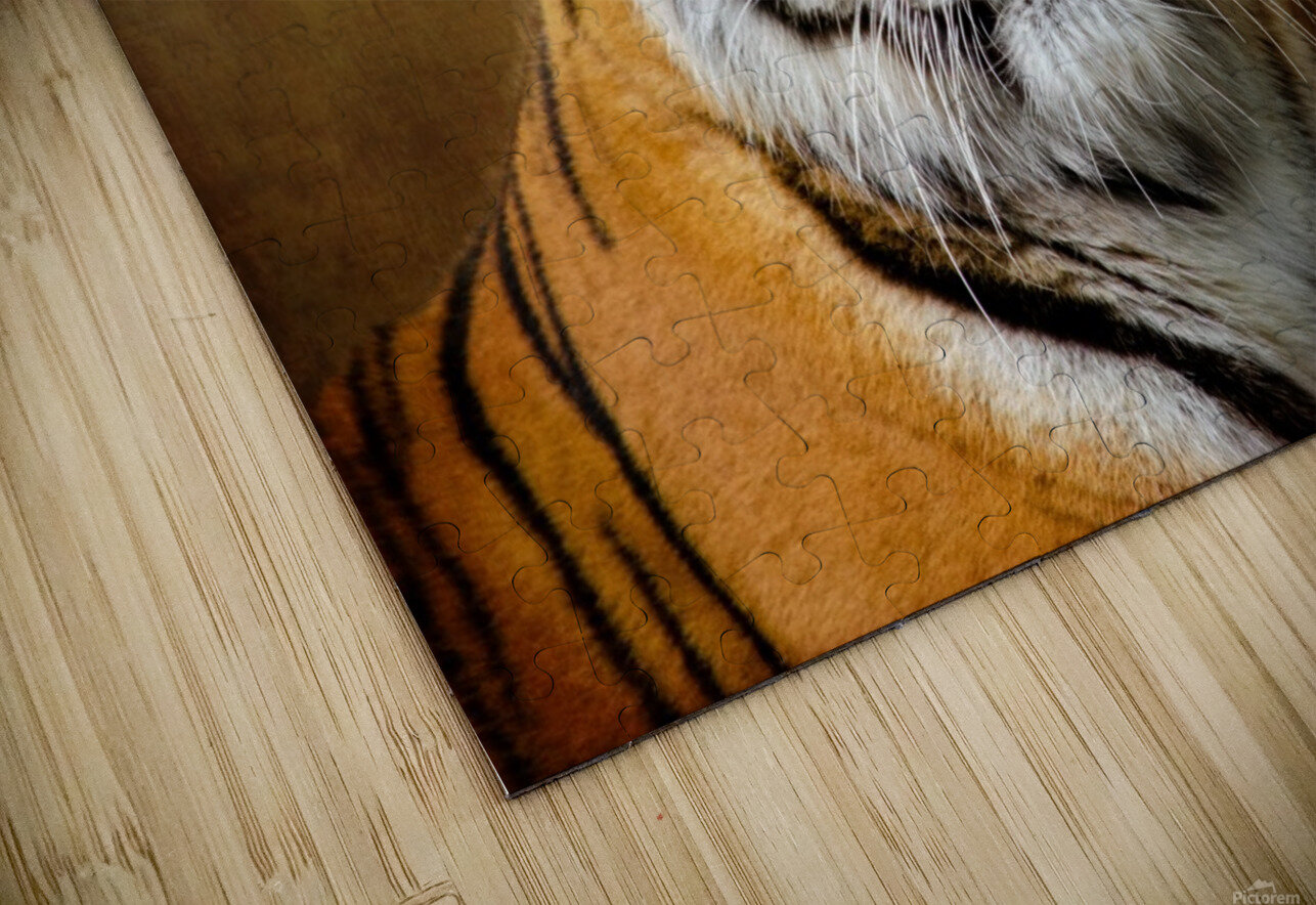 Bengal Tiger HD Sublimation Metal print