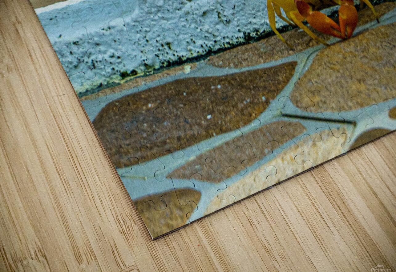 Cayman Crab HD Sublimation Metal print