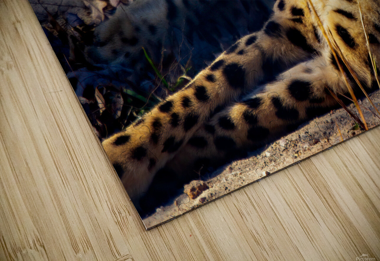 Cheetah HD Sublimation Metal print