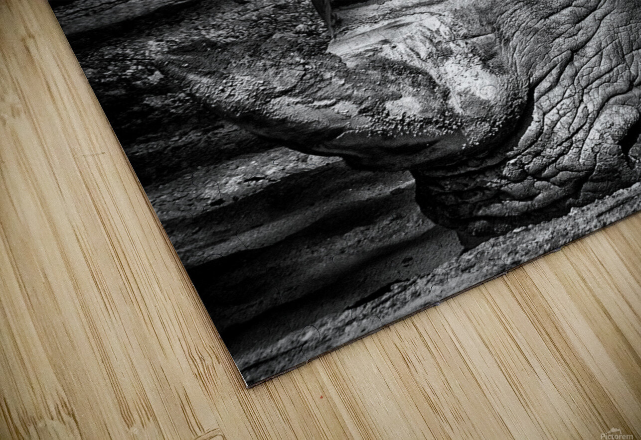Rhinoceros HD Sublimation Metal print