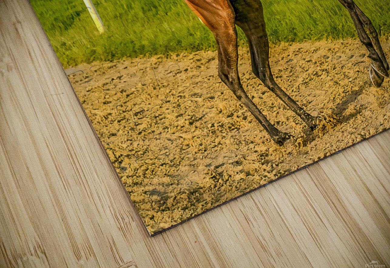 Racehorse12 HD Sublimation Metal print