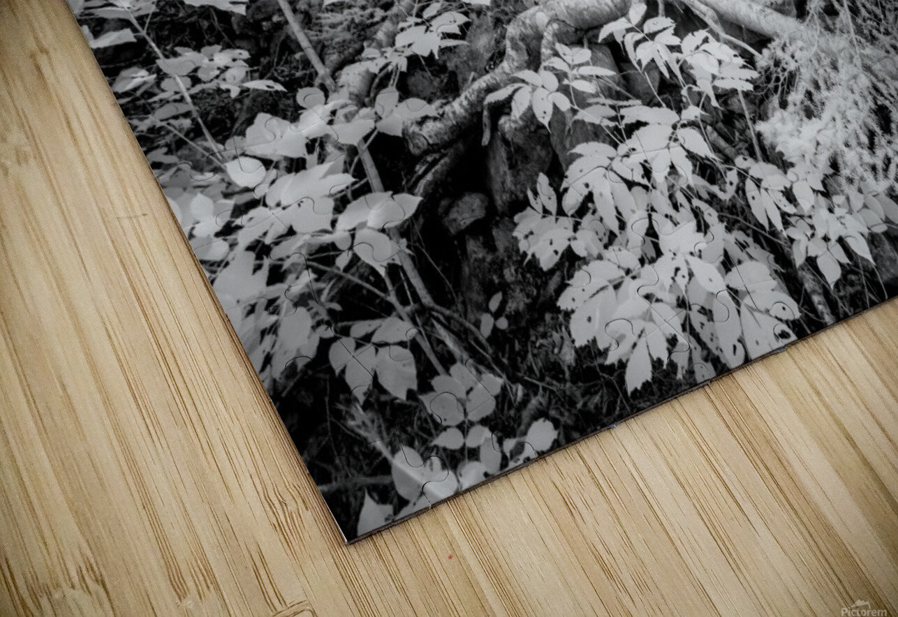 Roots HD Sublimation Metal print
