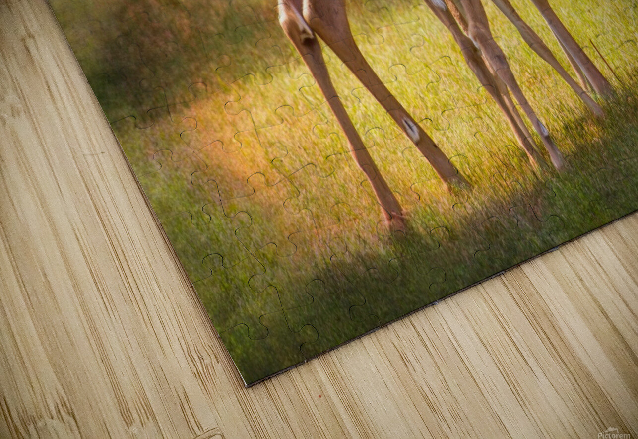 Doe with fawn looking back HD Sublimation Metal print