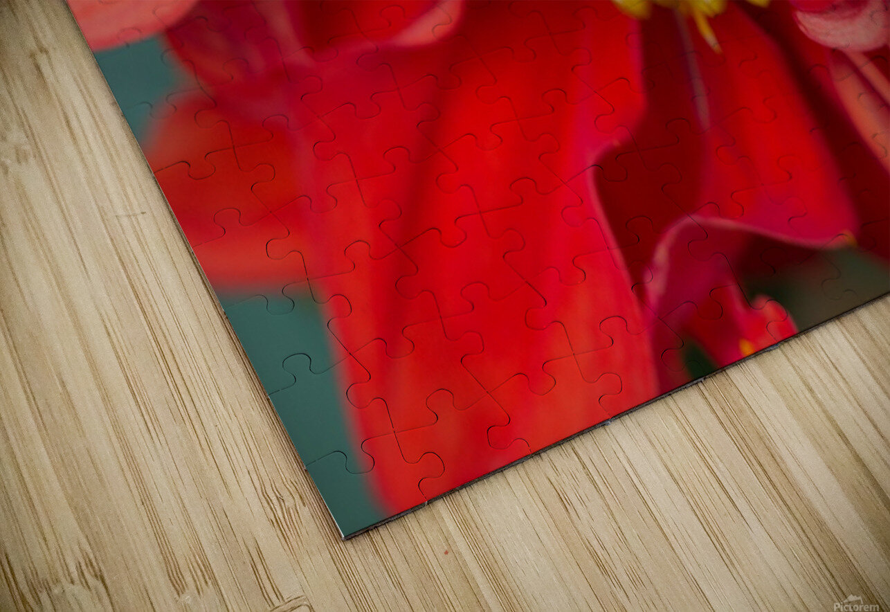 Red and Yellow HD Sublimation Metal print