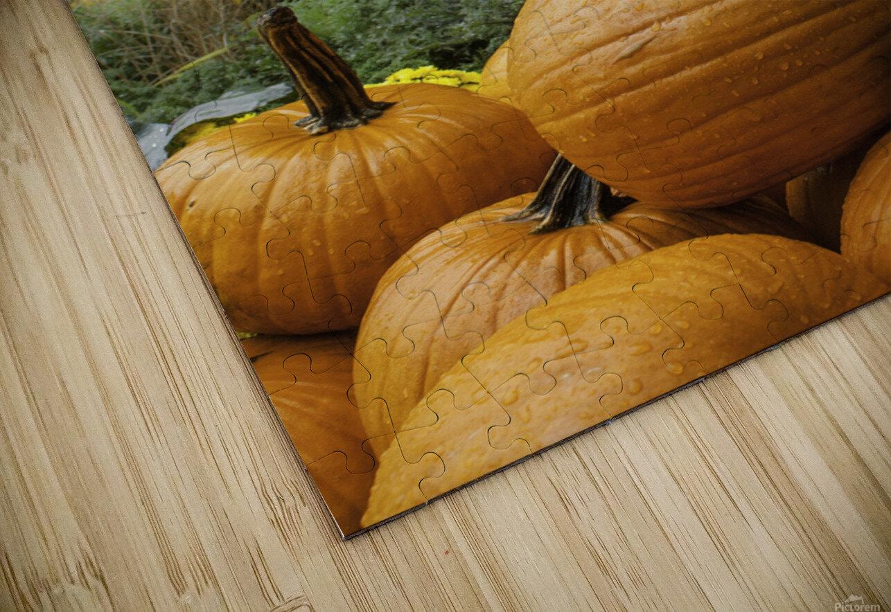 Pumpkins HD Sublimation Metal print