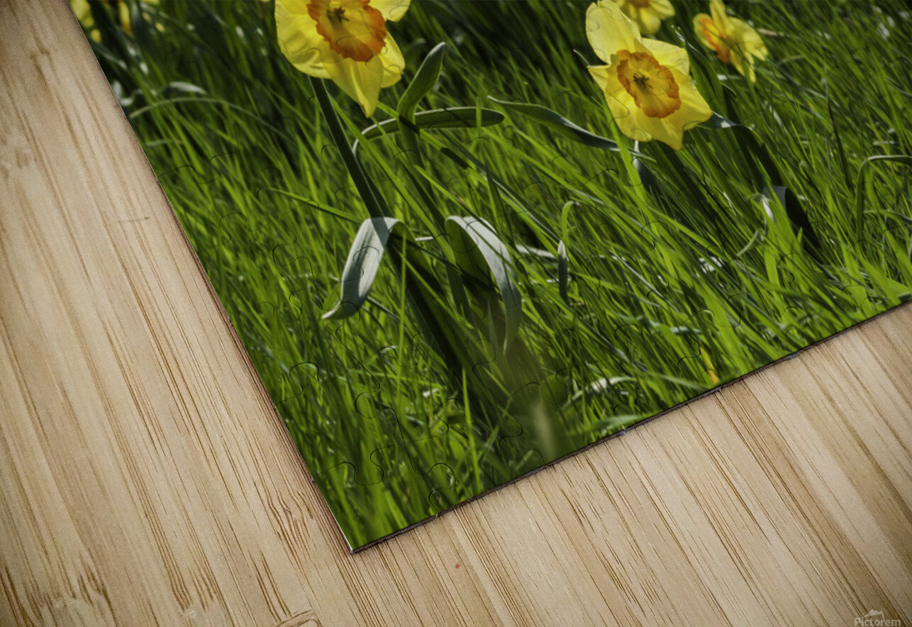 Flowers on the Hills HD Sublimation Metal print