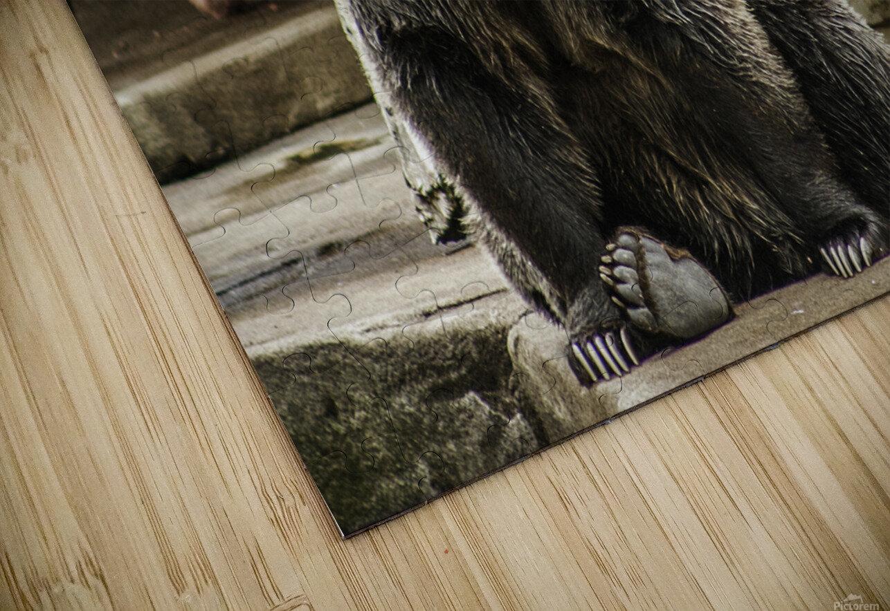 Greetings  Brown Bear  HD Sublimation Metal print
