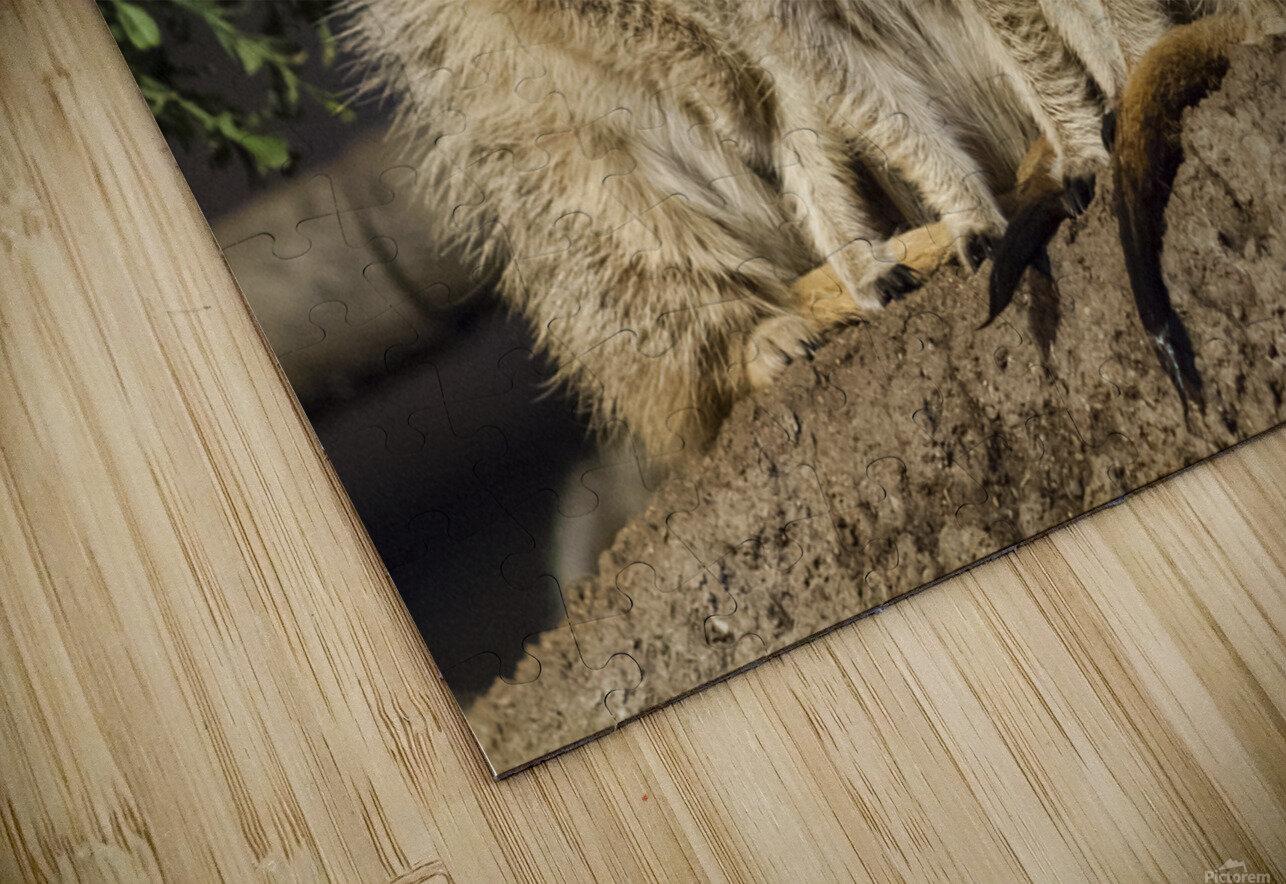 Take Watch  Meerkats  HD Sublimation Metal print