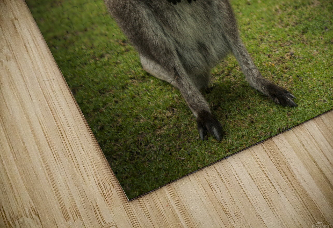 Intriguing   Wallaby  HD Sublimation Metal print