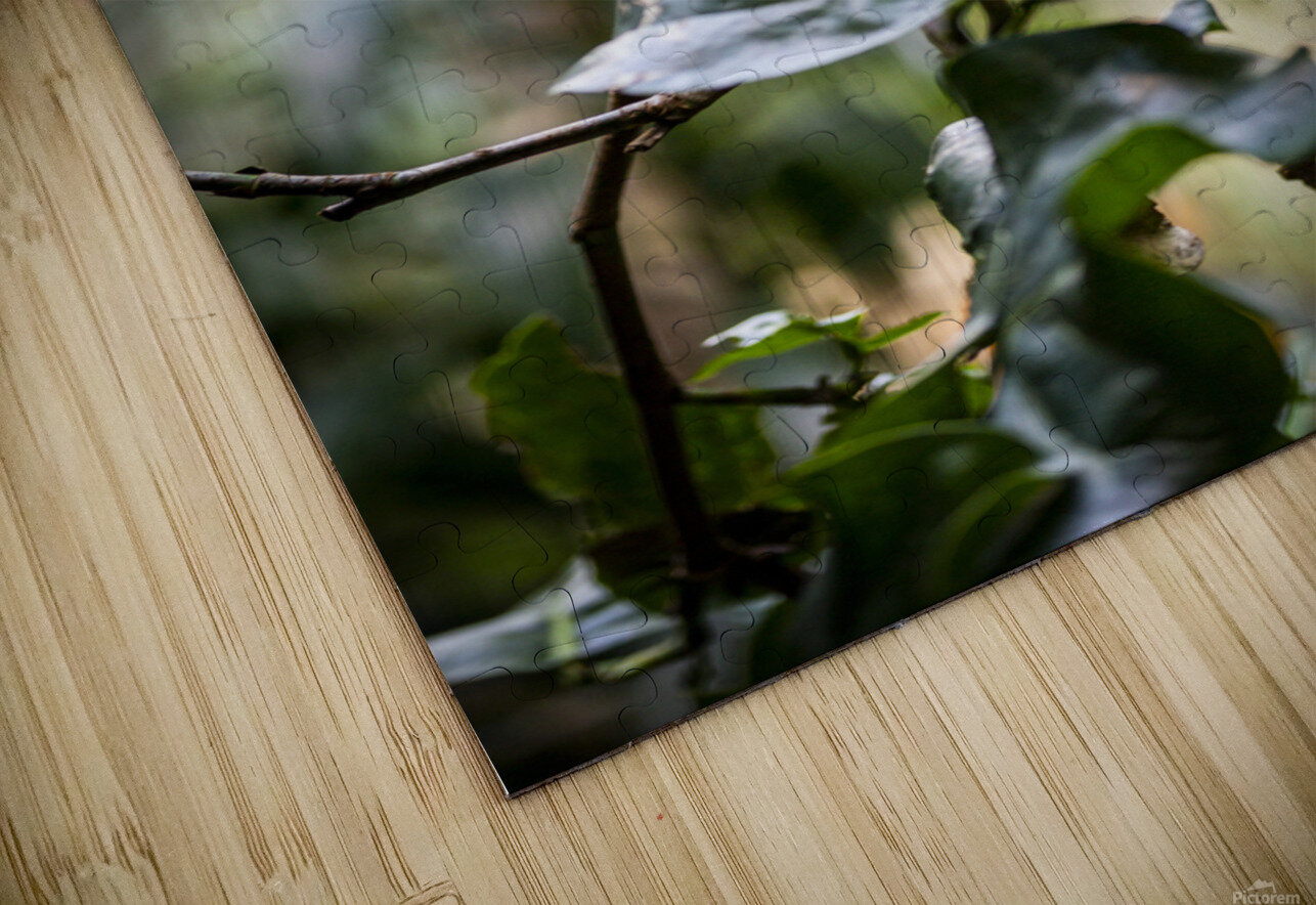 Standing Out  Tucan  HD Sublimation Metal print