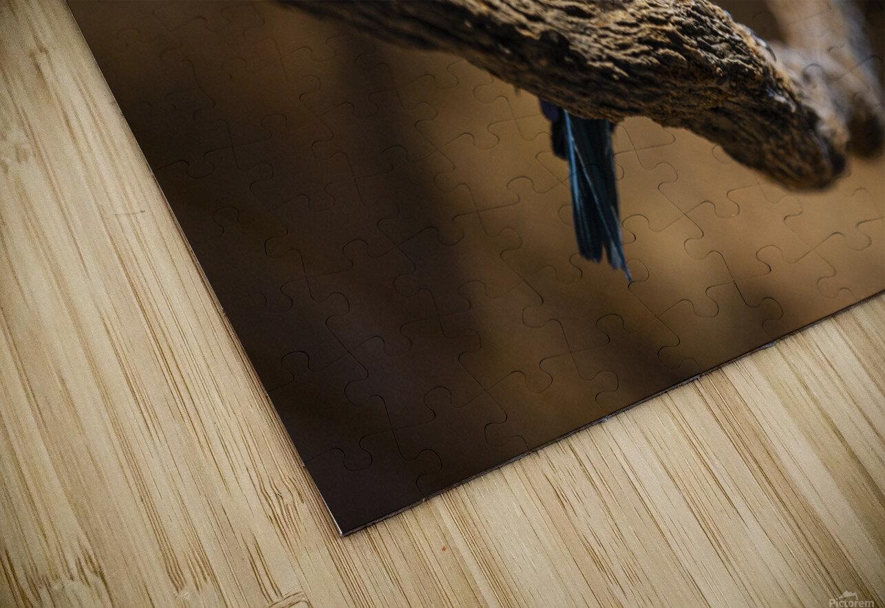 Perfect Pose  Bird  HD Sublimation Metal print