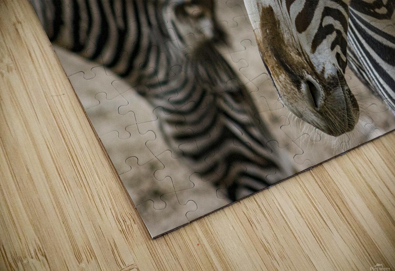 Stripes  Zebra  HD Sublimation Metal print