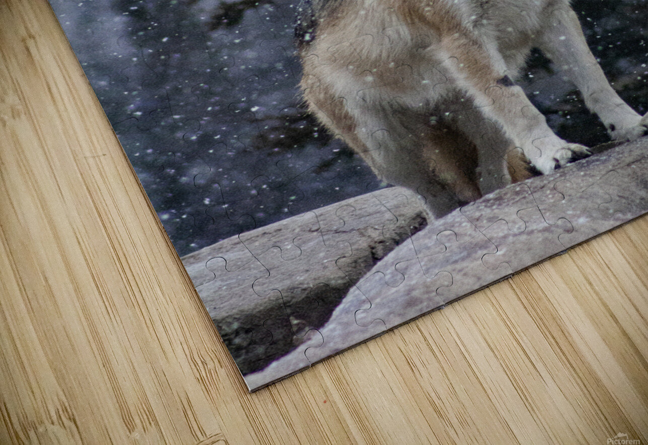 Cold Night Wolf HD Sublimation Metal print