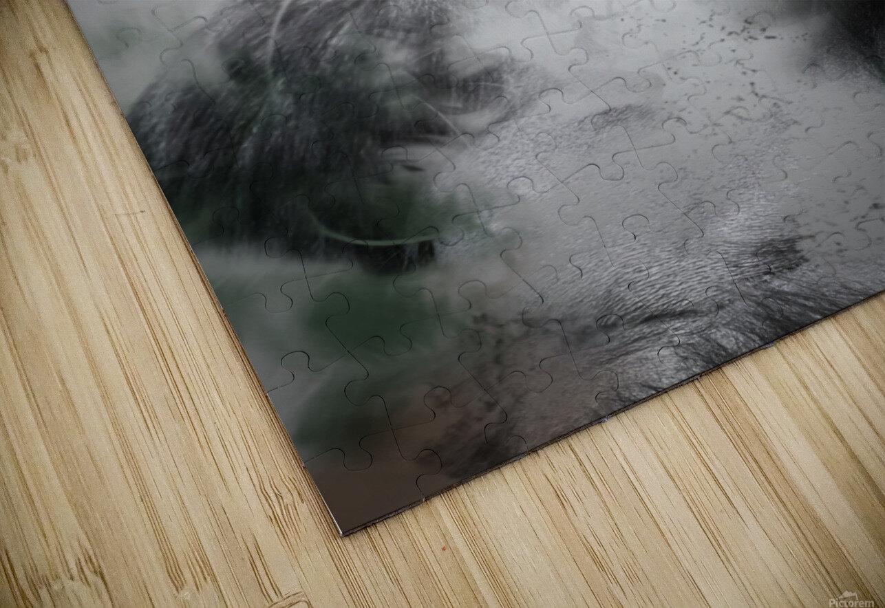 Gorille HD Sublimation Metal print
