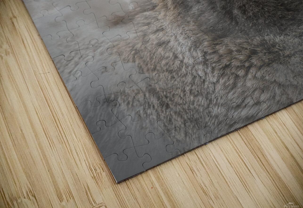 Mouflon HD Sublimation Metal print