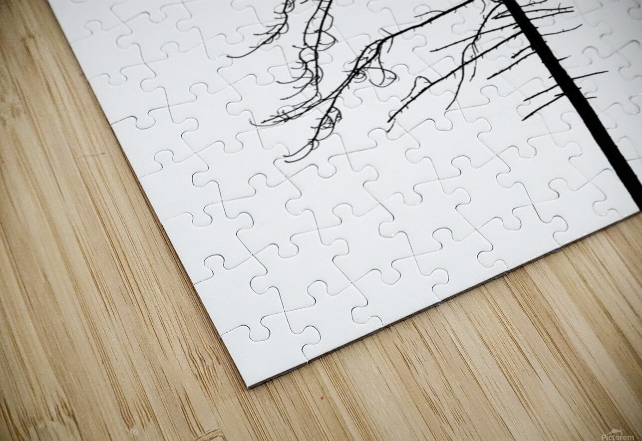 Tree silhouette HD Sublimation Metal print