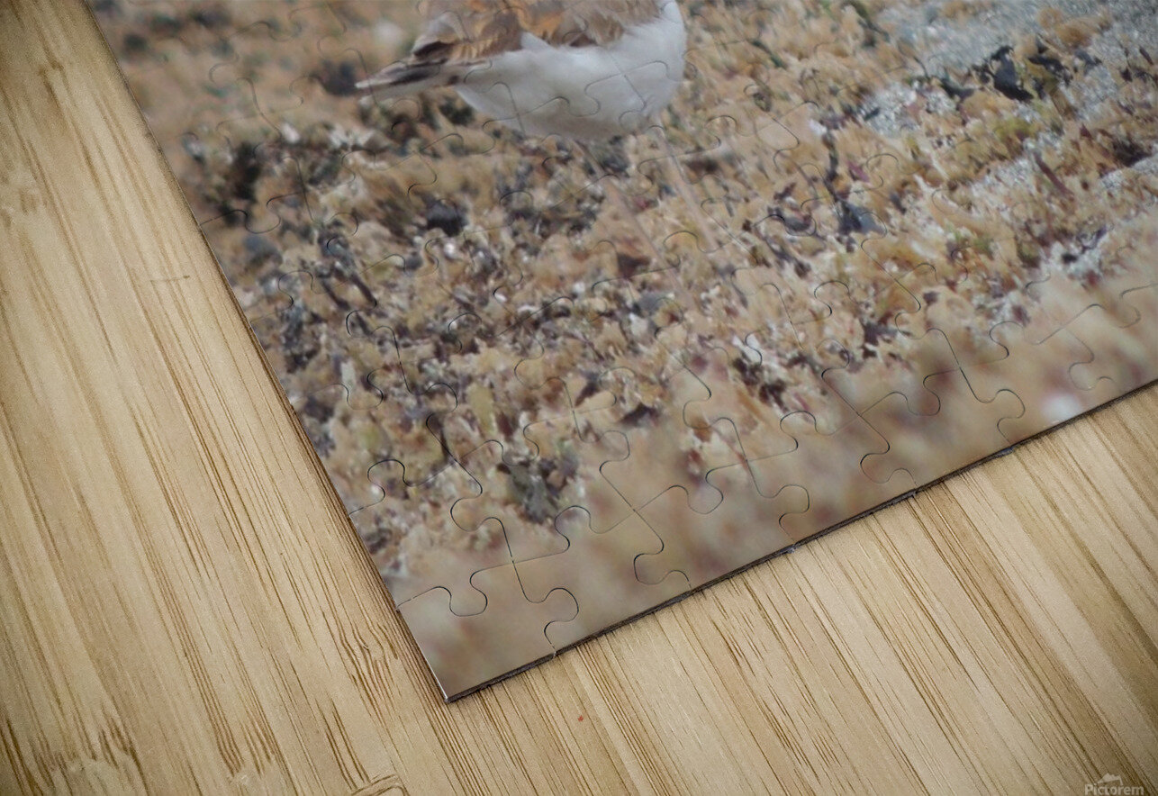 Killdeer Camouflage HD Sublimation Metal print