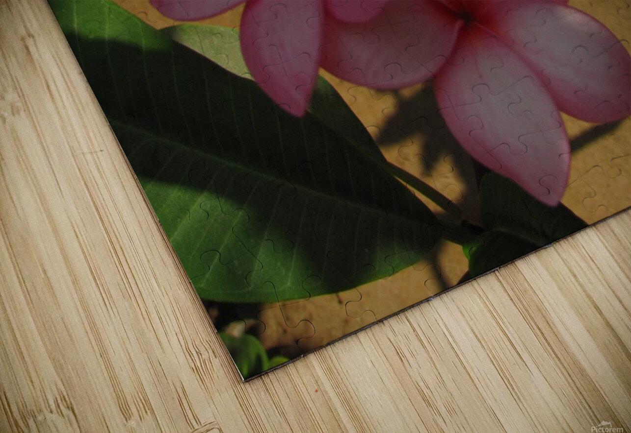 Pink Plumeria 2 HD Sublimation Metal print