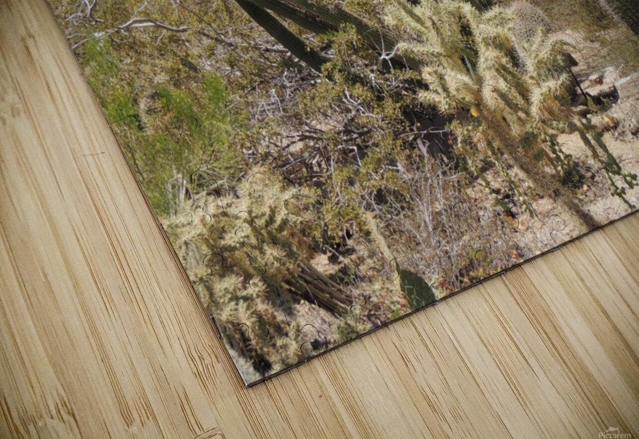 Cactus Garden HD Sublimation Metal print