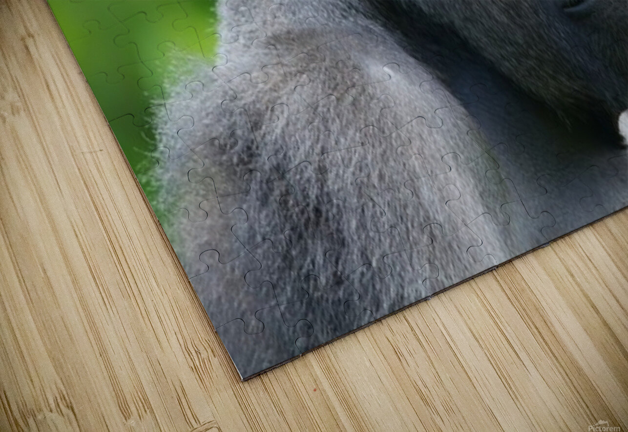 Gorilla HD Sublimation Metal print