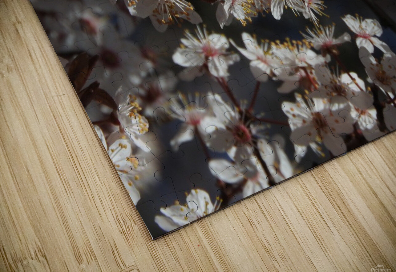 Lovely Blossoms HD Sublimation Metal print