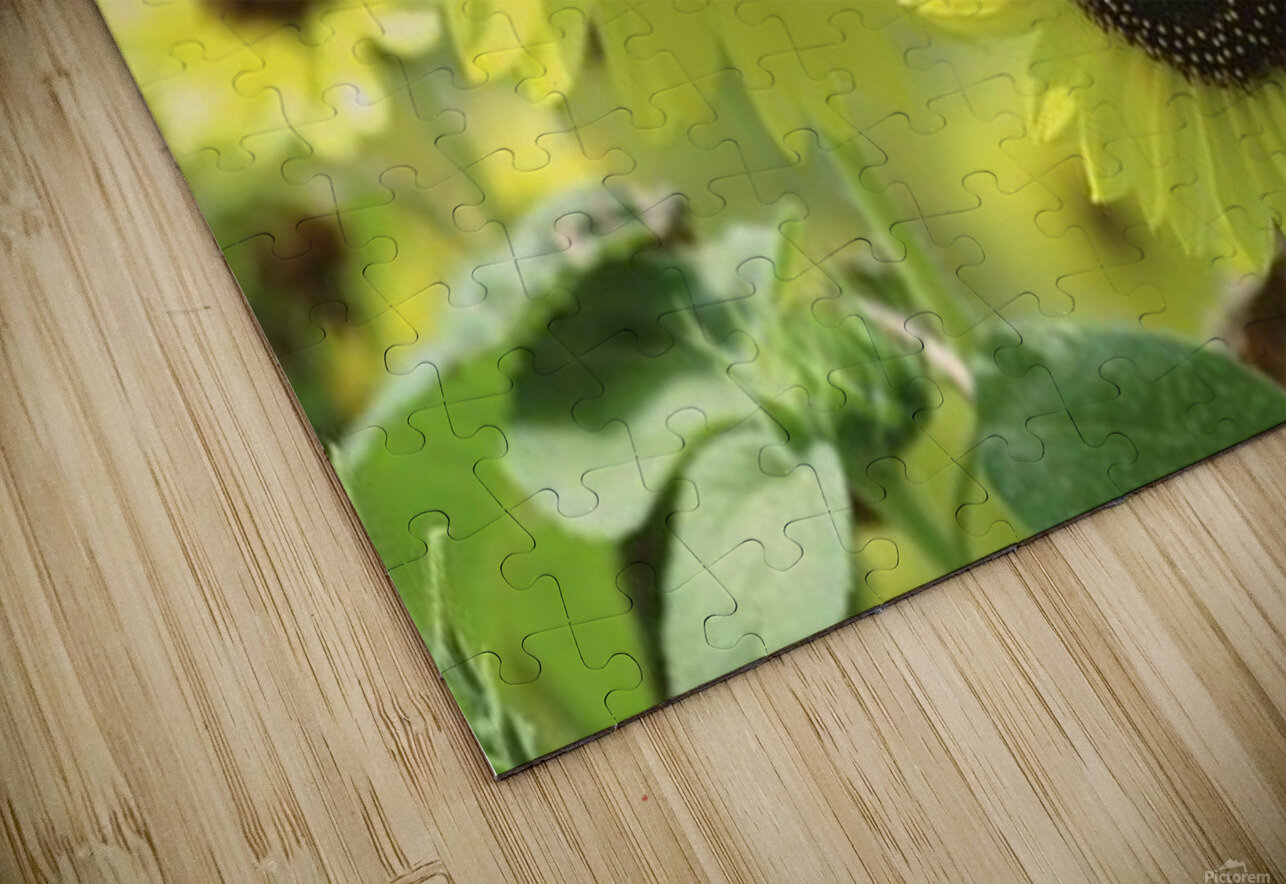 landscape_2_0976 HD Sublimation Metal print