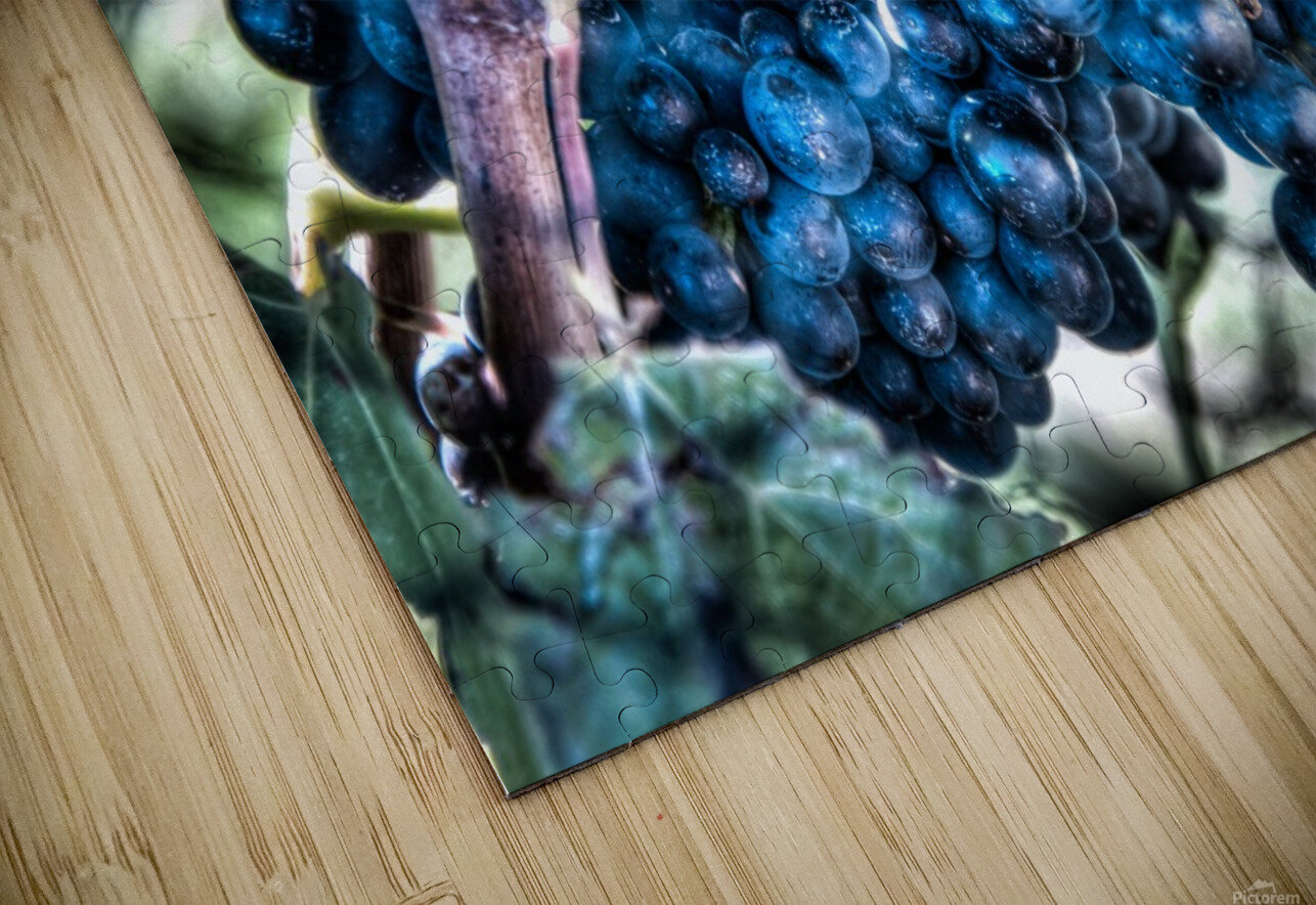 Bunches of Grapes HD Sublimation Metal print