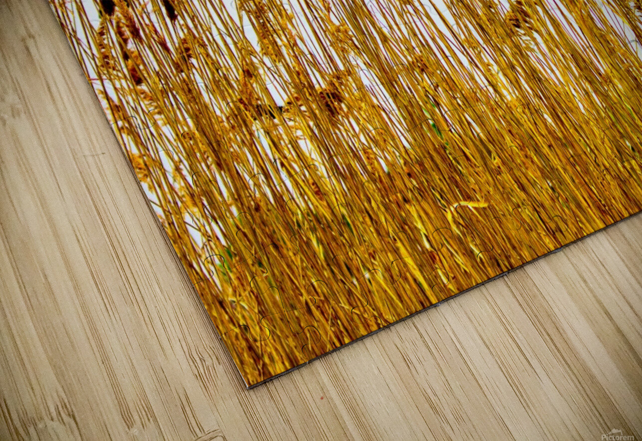 IMG_2852 2 HD Sublimation Metal print