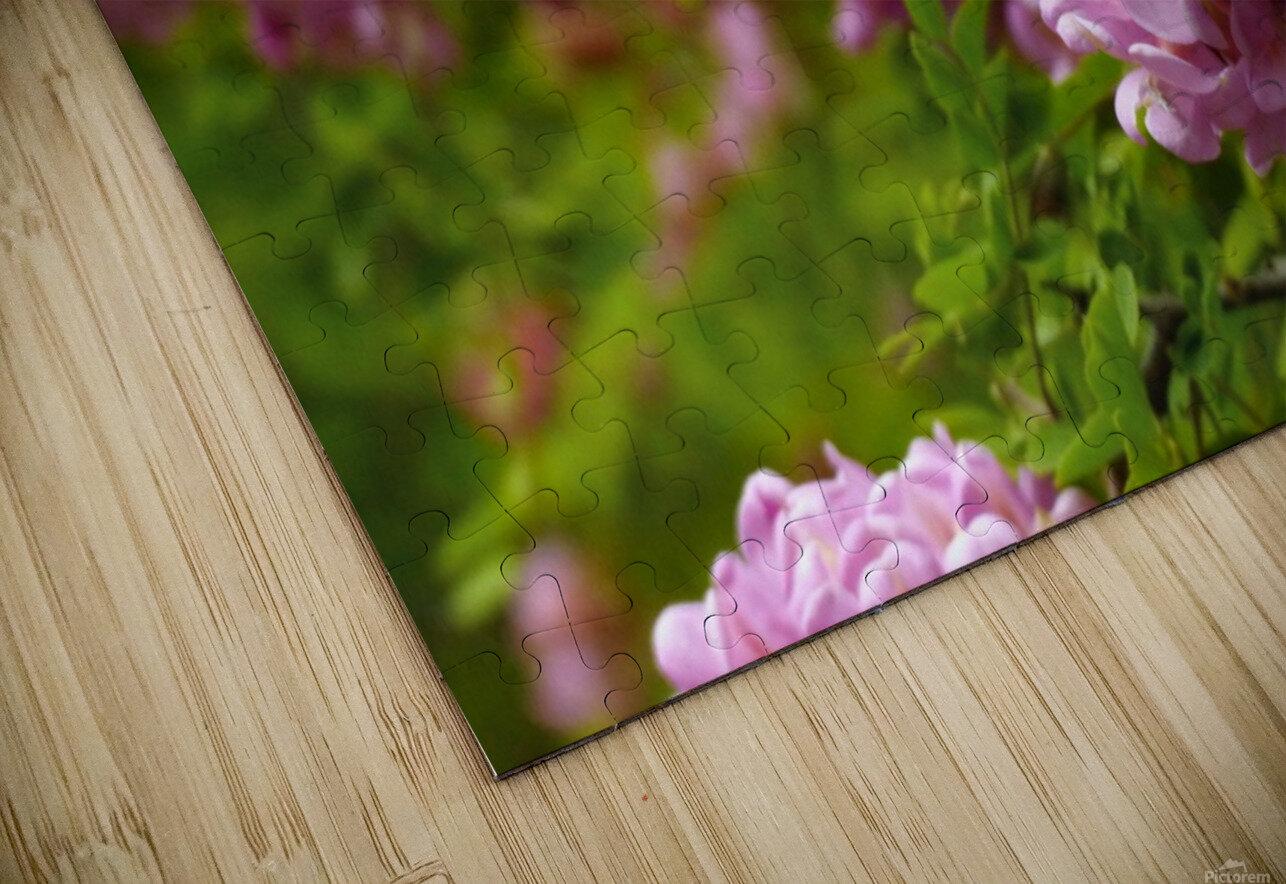 Rose Acacia Blossoms HD Sublimation Metal print