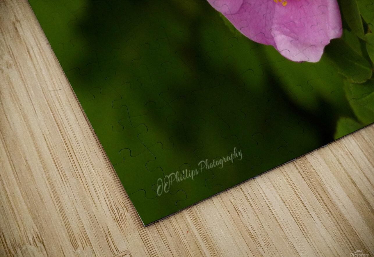 Nootka Rose HD Sublimation Metal print