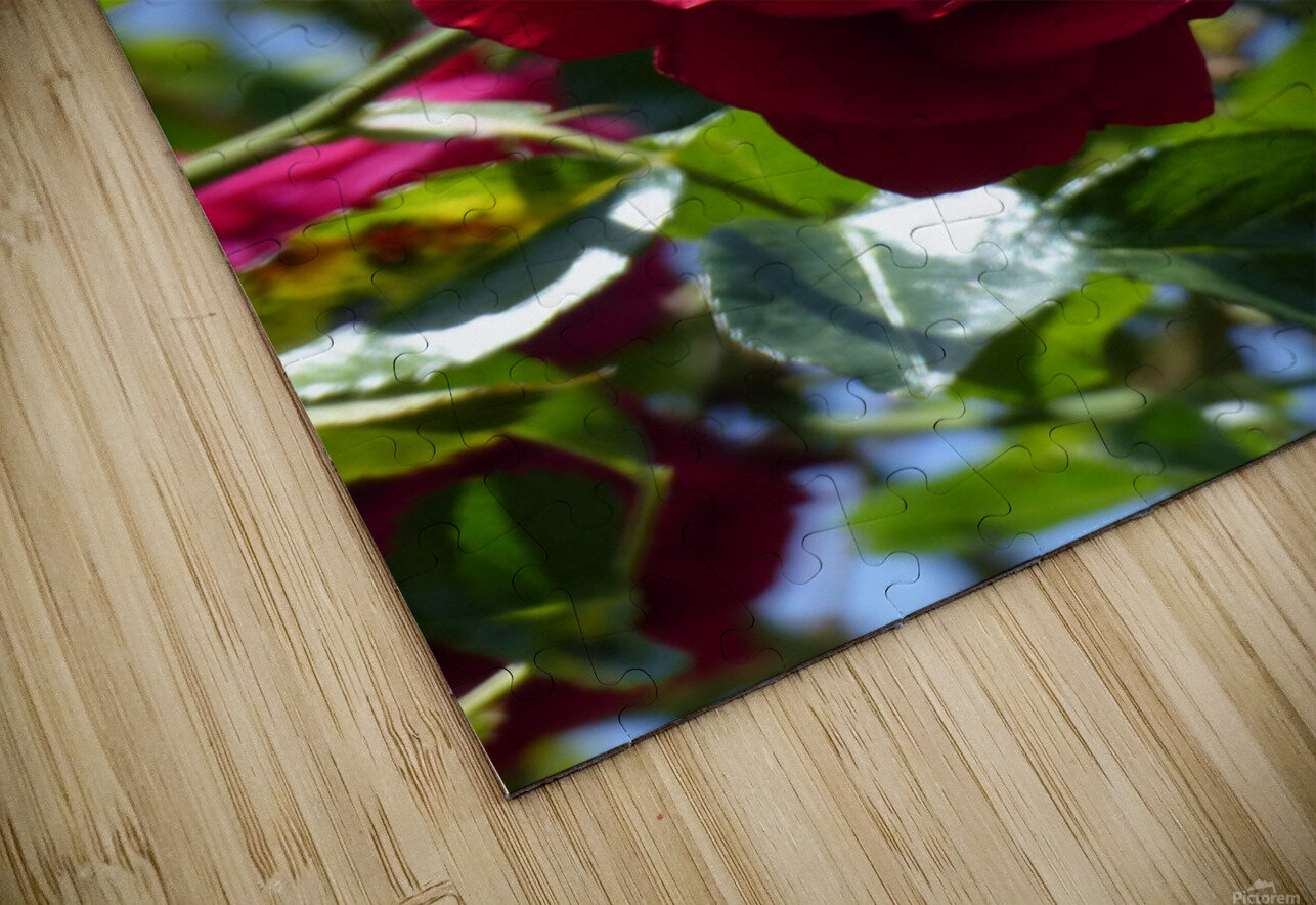 Red, White and Blue HD Sublimation Metal print