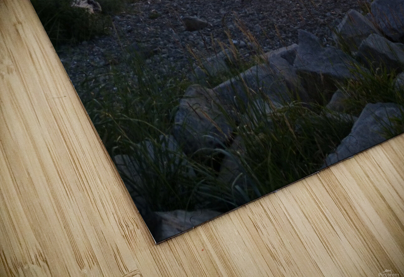 Walking in Light HD Sublimation Metal print