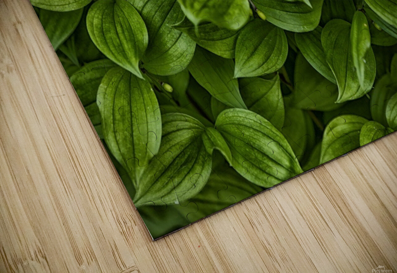 Hosta HD Sublimation Metal print