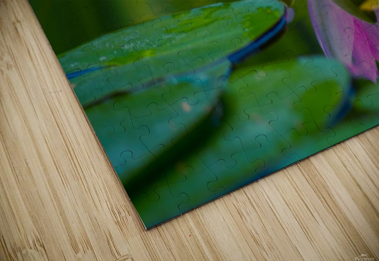 Water lily HD Sublimation Metal print