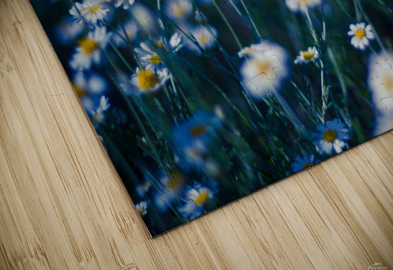 Summer, spring daisy field HD Sublimation Metal print