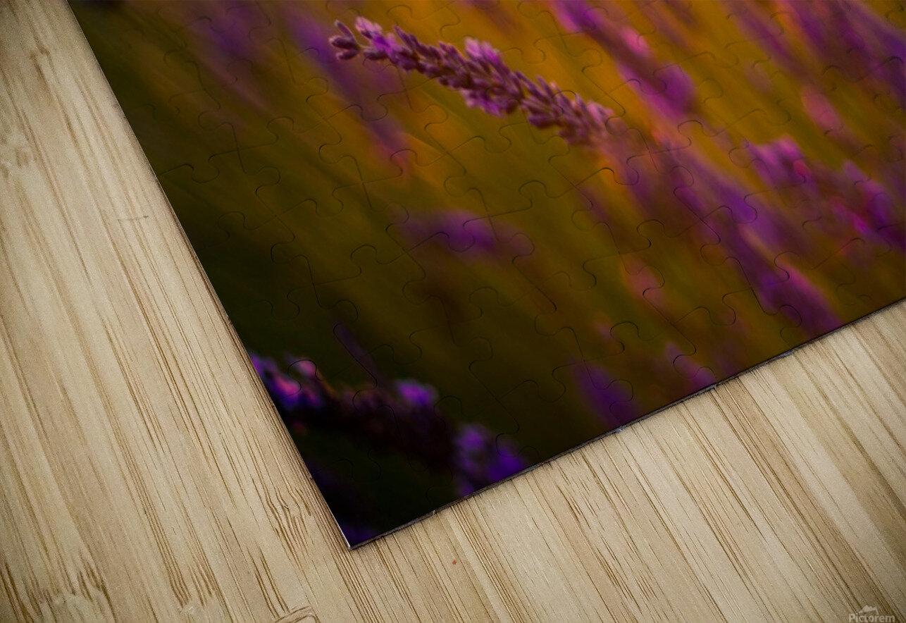 Sunset lavender flowers HD Sublimation Metal print