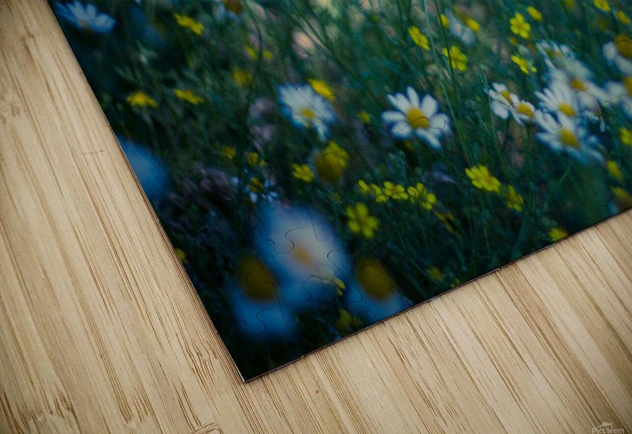 Summer, spring daisy field HD Sublimation Metal print